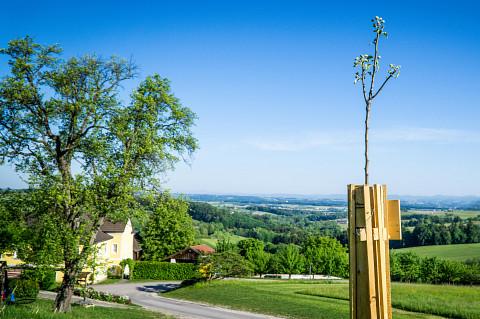 Die Streuobstwiese – alte Bäume, neue Chancen