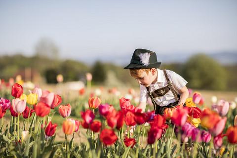 Der Frühling beim Mostbaron - Blütenduft und Lebensfreude